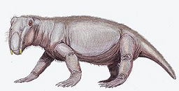 Lystrosaurus from Wikipedia